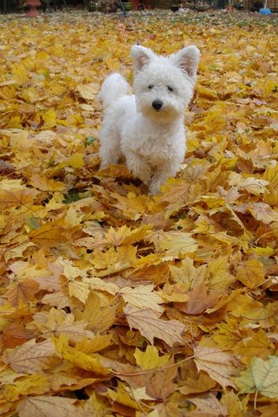 A Niqqi el encanta el otoño