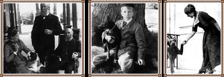Duke - Jack - Laddie Boy