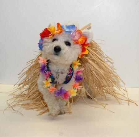 Niqqi vestida de hawaiana