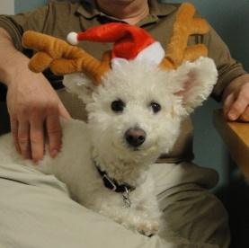 Niqqi quiere unirse al Equipo de Santa y ayudarle a repartir regalos y presents para Navidad.  Ella también nos relata una historia de Santa.
